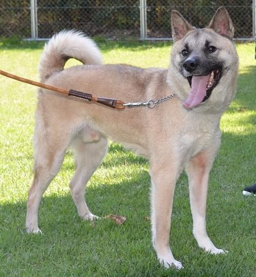 テレビで話題!「坂上どうぶつ王国」に出演の保護犬タックの物語